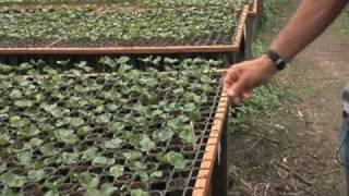 Brazil's Farmers Seek Higher Coffee Profits