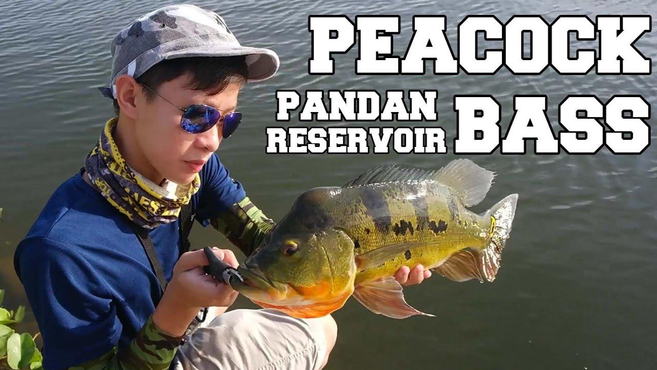 e86b2e86d6 Peacock Bass Fishing | Peacock bass fishing at Pandan - YouTube