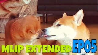 MLIP extended cuts - EP 05 / Shiba Inu puppies