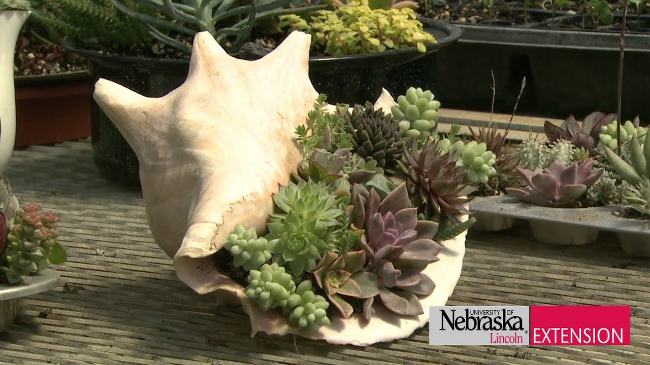 Succulents In Containers Youtube