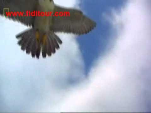 chim ung danh bai dai bang