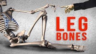 How to Draw Legs - Bone Anatomy for Artists