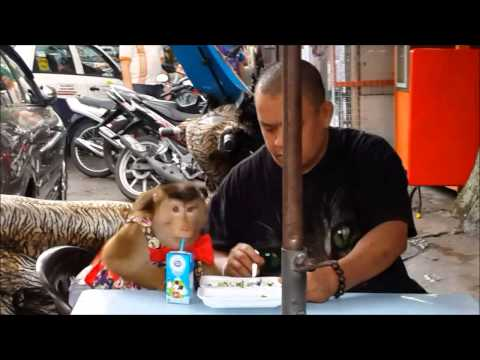 Monyet Lucu Di Bukit Bintang Kuala Lumpur