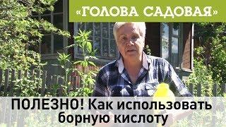 Голова садовая - ПОЛЕЗНО! Как использовать борную кислоту