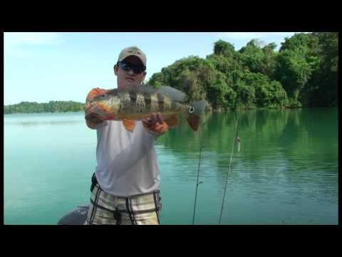 FISHING IN PANAMA CANAL 4 -  PEACOCK BASS.mpg