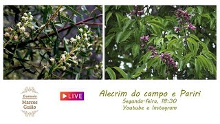 Alecrim do Campo e Pariri: Conversando sobre plantas medicinais com Marcos Guião
