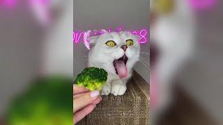 ПРИКОЛЫ С ЖИВОТНЫМИ 2021 Смешные Животные Собаки Смешные Коты Приколы с котами Забавные Животные