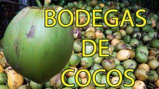 Cocos MEGABODEGAS en Nahulingo Sonsonate El Salvador C A
