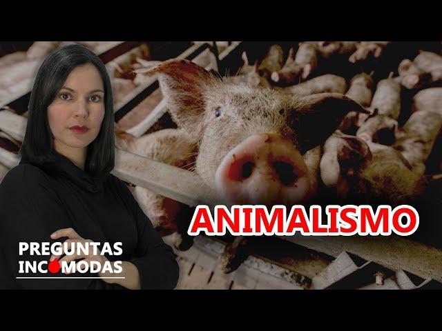 5 Preguntas Incómodas sobre el animalismo