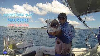 Moreton Bay Mackerel Live Baiting