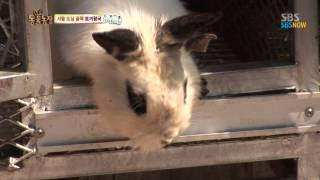 SBS [동물농장] - 서울 도심 골목 토끼왕국