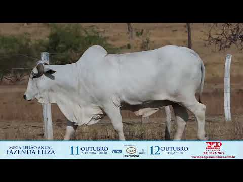 LOTE 230 1