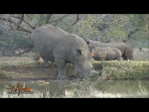 Zululand Tree Lodge & Zululand Safari Lodge at Ubizane Nature Reserve