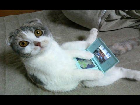 Funny Cats Compilation  Gatti Pazzi