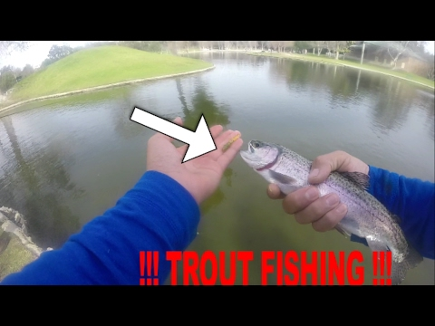 Trout Fishing Ralph B    - !!!  ULTRA CLEAR WATER !!!