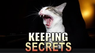Talking Kitty Cat 53 - Keeping Secrets thumbnail