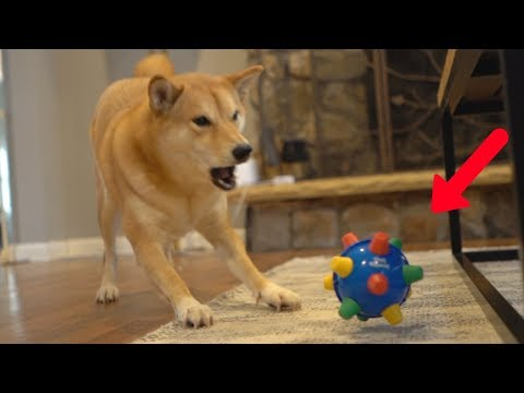 dog-reacts-to-extremely-bouncy-ball.