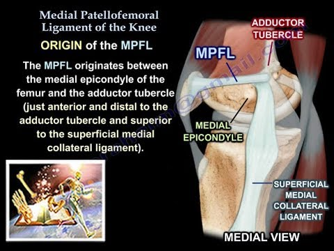 Medial Patellofemoral Ligament Of The Knee Anatomy ,Everything You ...