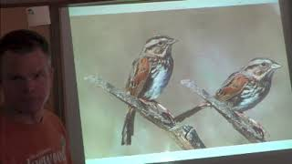 How to draw birds: side, front, back, and 3/4 views