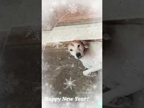 My fave dog
