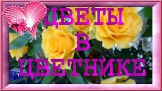Цветы flowers Цветы в цветнике Красивая музыка Заказать слайд шоу из фотографий .(Приглашаю в гости мой блог http://lyubovgrosheva.ru/ Принимаю заказы на слайд шоу из Ваших фотографий е-майл: lyubovgrosheva@gma..., 2015-06-24T14:46:44.000Z)