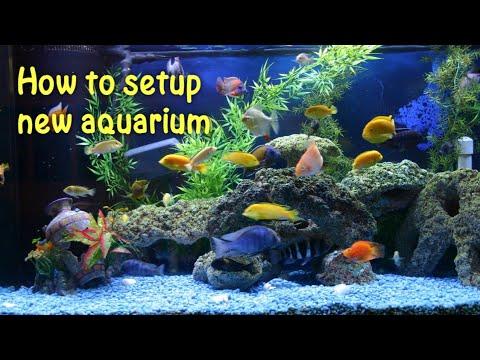 How To Setup New Aquarium