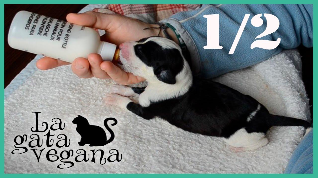 como hacer un biberon para cachorros recien nacidos
