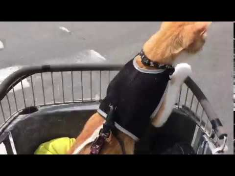 Cat takes a ride