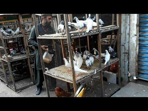Pigeons market Lahore - Kabootar market visit 2020