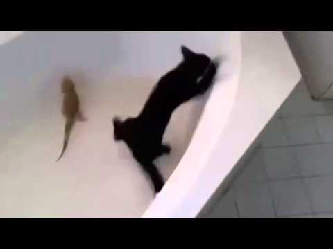 завалился к тетке в ванну