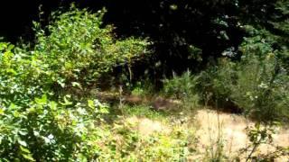 Oregon Land Clearing...Habitat restoration,invasive weed control.(before)