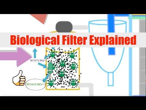 Biological Filtration Explained | Ask The Aquaponics God