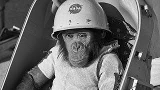 अंतरिक्ष में गए 'हैम' के साथ क्या हुआ था? | What happened to Ham in Space?