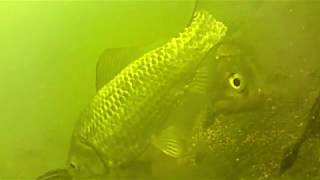 ловля карася в тёплом канале зимой на пенопластовые шарики