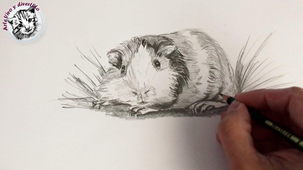 Como Dibujar Una Cobaya Realista Con Lapiz Paso A Paso Y Muy Facil