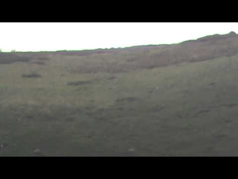 Rabbit shooting beyond 1000 yards
