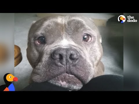 Dog Found Alone Never Leaves His New Mom's Side | The Dodo