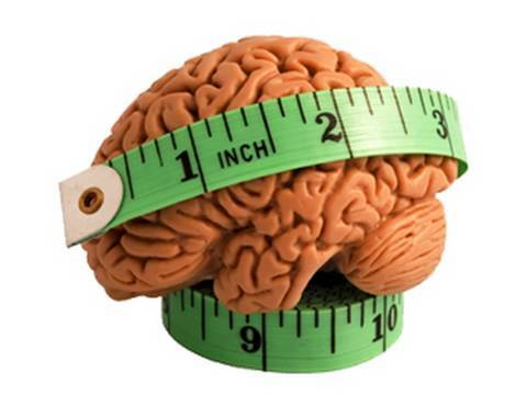Image result for brain size