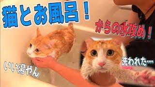猫との混浴、人類の夢 ご視聴ありがとうございました! ぜひチャンネル...