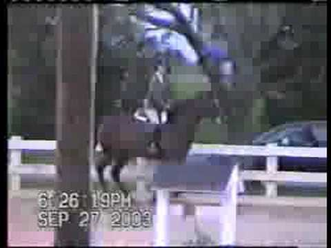 Satin Jewel- 1997 bay mare- sold