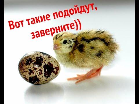 Инкубационные яйца с доставкой. Географический вестник от 16.06.17 .