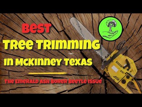 Best Tree Trimming in McKinney Texas - Emerald Ash Borer Beetle ❂ Tree Service ❂ Arborwise ❂ 2020Kaynak: YouTube · Süre: 4 dakika14 saniye