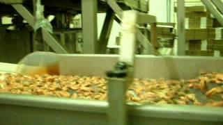 видео Как и где правильно хранить креветки?