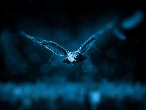 Stephan Remmler - Vogel der Nacht (Longmix)