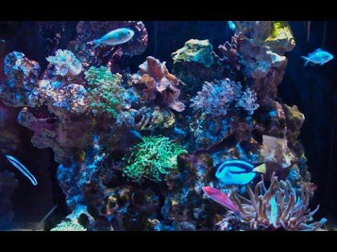 Wilhelma Stuttgart: Das Aquarium-Terrarium - Tropisches Seewasser (06.05.2014)