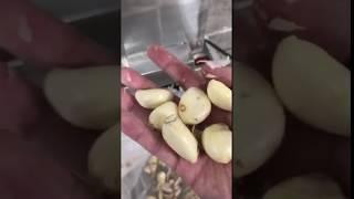 마늘 대량 껍질 까기 까는 기계 자동 제거기 박피기 탈…