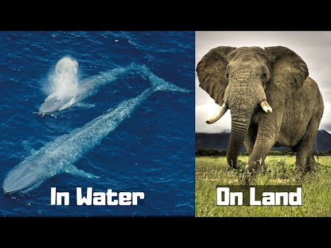 Biggest Animals Of Their Kingdom on Planet Earth