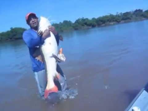 pescaria de pirarara no rio Araguaia Luiz Alves Chumbinho