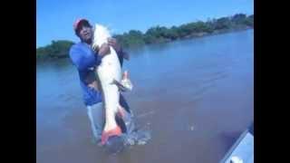 Baixar pescaria de pirarara no rio Araguaia Luiz Alves Chumbinho