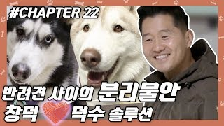 CHAPTER 22 | 창덕 & 덕수 형제 사이의 분리불안 극복하기 솔루션!  #강형욱 #개통령 #개훈련사 [개는 훌륭하다]